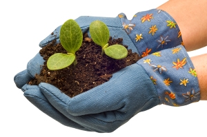 Gardening Gloves Cradling Baby Plants